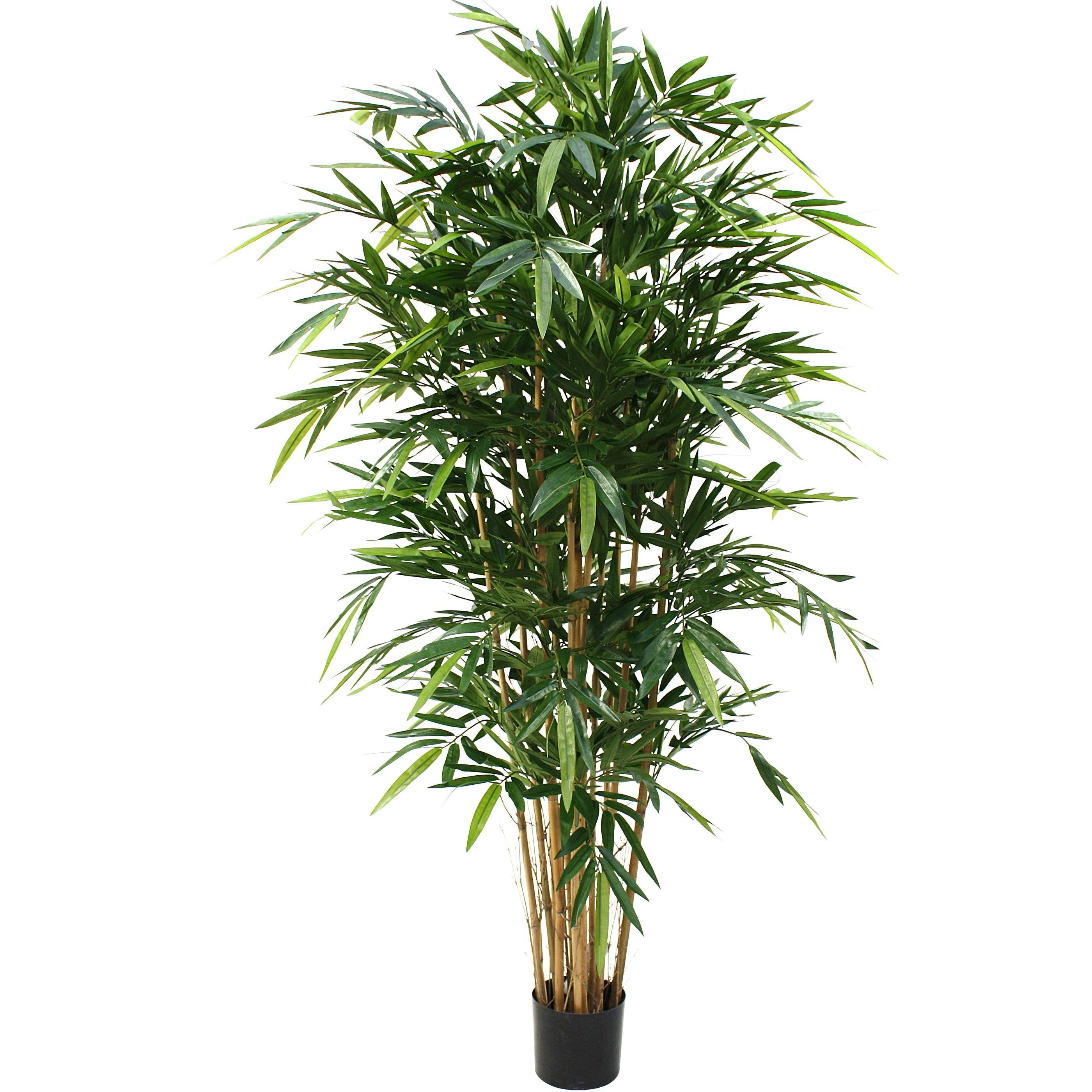 Bamboe Plant Binnen.Designplants Bamboe Kunstplant 180