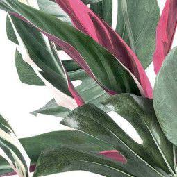 KEK Amsterdam Monstera Botanical leaves behang