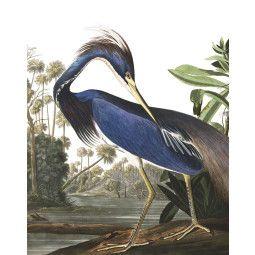 KEK Amsterdam Louisiana Heron behangpaneel