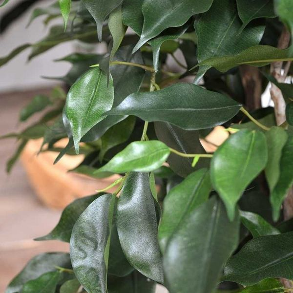 Designplants Ficus Exotica kunstplant 125